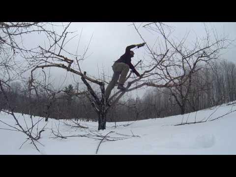 Spring Apple Tree Pruning