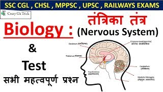 Gk : Nervous System ( तंत्रिका तंत्र )  For SSC CGL , CHSL , UPSC , RAILWAYS EXAMS
