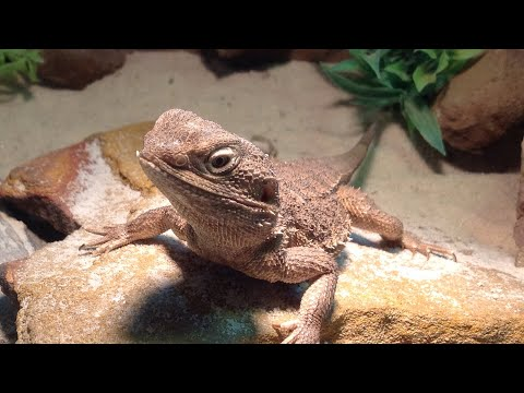 Late September REPTILE UPDATE live!