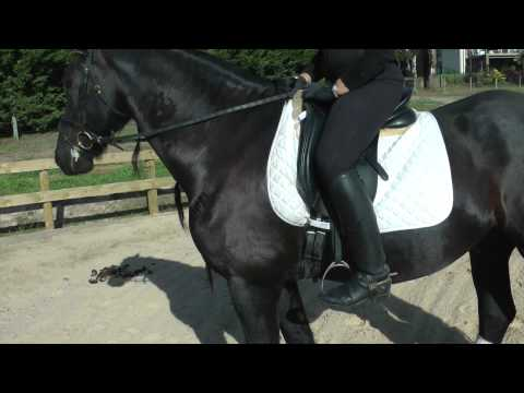 How long should the stirrups be? (foot position in stirrup) - YRS TV Episode 52