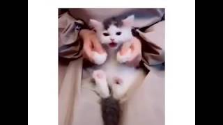 قـطة جـمـيـلة تـغـنـي مع مـربـيـها