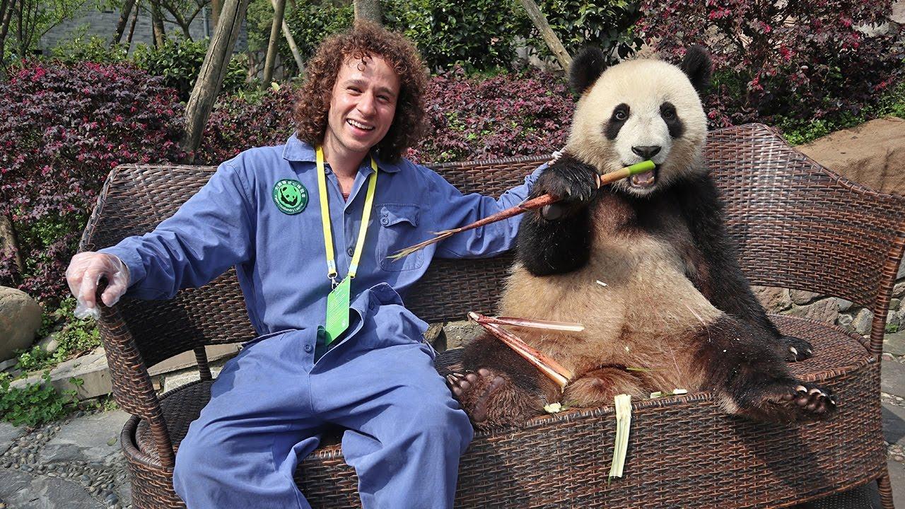 Un día trabajando en una RESERVA DE PANDAS! | China