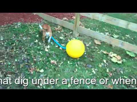 Dog digging under the fence? The Oleballnchain is the answer
