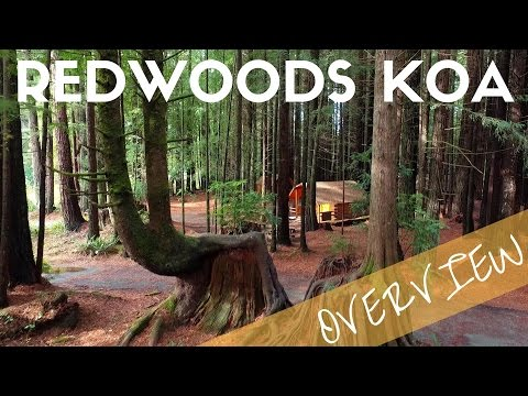 Crescent City Redwoods KOA Campground Overview | Camping near Redwoods National Park