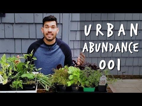 My Spring Plant Haul | Urban Abundance Ep. 001