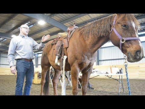 Saddle up with Algoma Pony Club