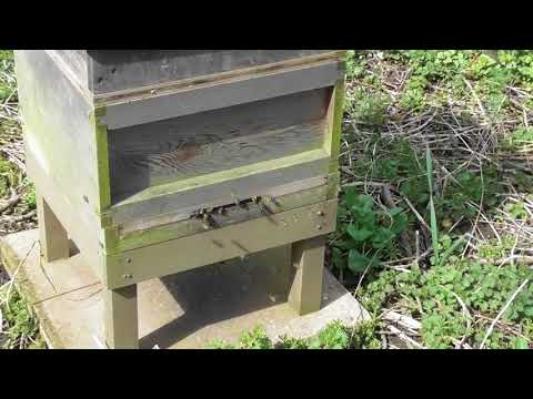Bee update Apr 18