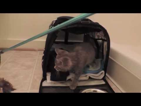 Day 1: Socializing a Feral Kitten
