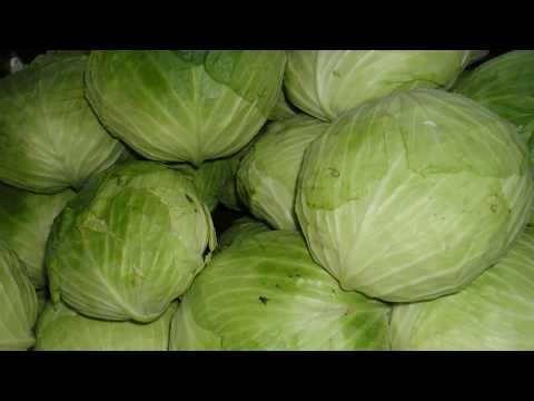 පියයුරු මත ගෝවාකොළ තිබ්බොත් වෙනදේ දන්නවද? - Cabbage Leaves for Breast Engorgement and Weaning