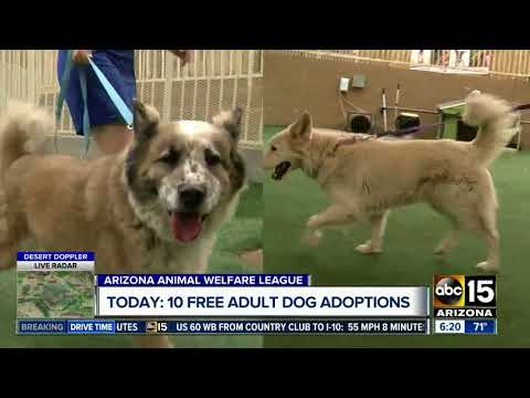 Donor pays for adoption fees for 10 adult dogs at AAWL