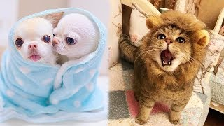 Download Cute baby animals Compilation cute moment of the animals - Soo Cute! #89 Video