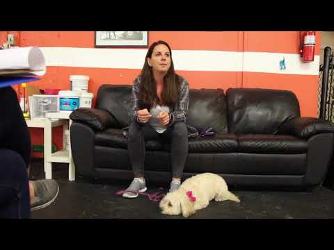 Dog with Separation Anxiety | Tessie at her Drop Off for Board and Train