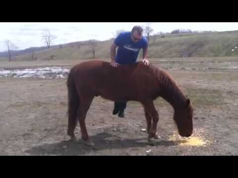 Trying to ride a wild horse
