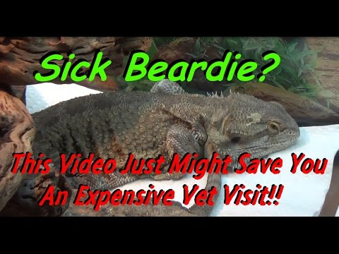 Sick Bearded Dragon?  Could THIS Video Save You Big Money & Needless Worry?