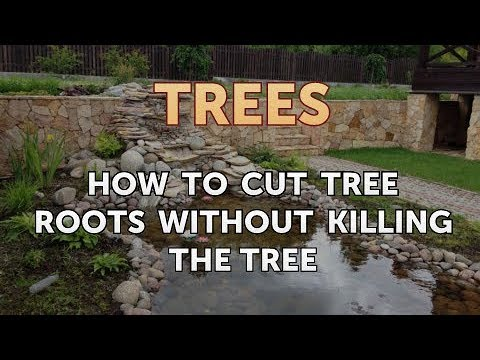 How to Cut Tree Roots Without Killing the Tree