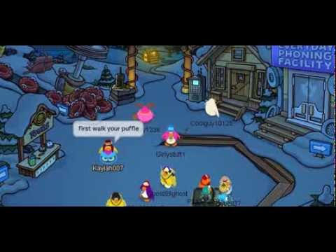 How to get a Gold Puffle on Club Penguin.