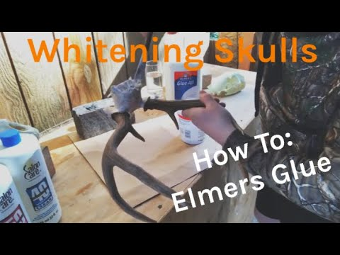 How To: Whitening Skulls with Elmers Glue