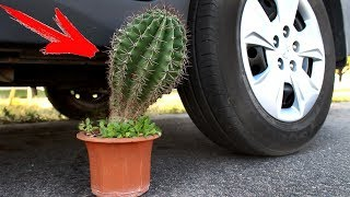 EXPERIMENT: CAR VS CACTUS
