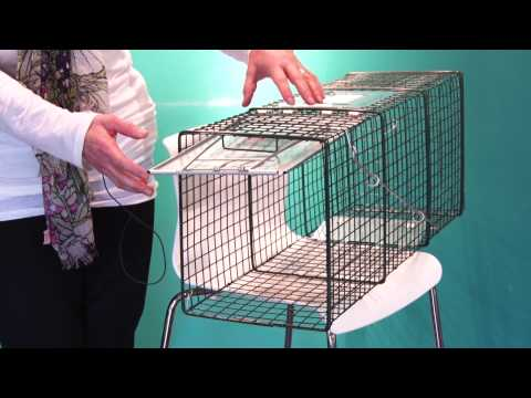 How to Set a Feral Cat Trap - Spay Neuter Charlotte