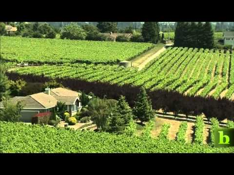 From Greens to Grapes: Balletto Vineyards
