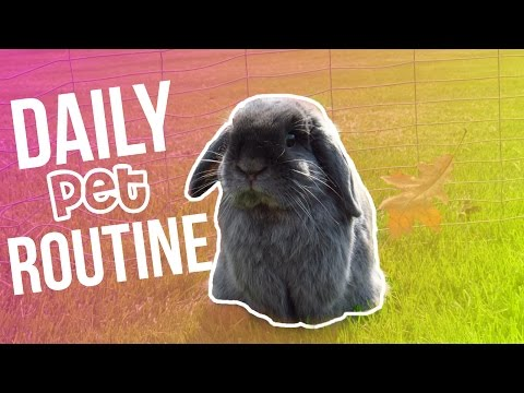 DAILY ROUTINE WITH PETS   Summer 2016   LovableLop