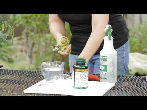 How to Make a Calcium Spray for Tomatoes : Garden Space
