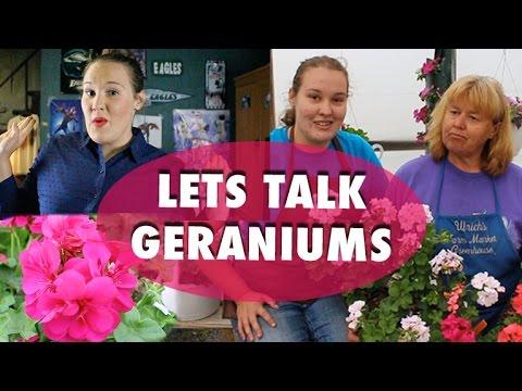Lets Talk Geraniums