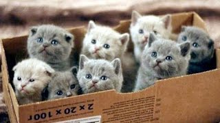 Cute Kittens are Very Mischievous