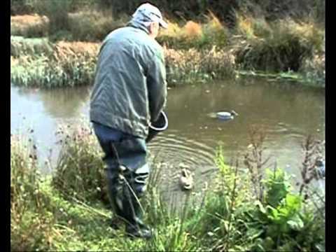 mink problem at the pond