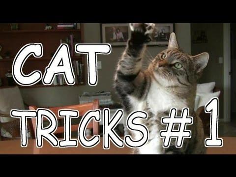 CAT TRICKS #1