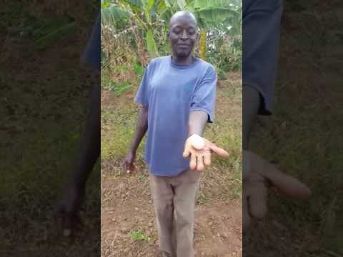 Masii-Kenya using an egg to detect underground water part 2
