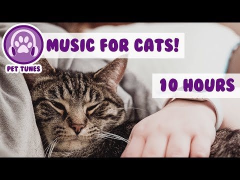 Unsettled Cat? We Have The Music For You! Soft Peaceful Notes That Will Destress, Relax Your Cat!