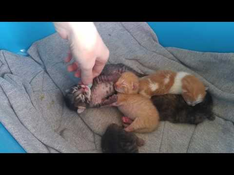 Newborn kittens. 3 days old. Sleeping