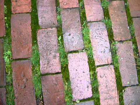 Moss & Brick