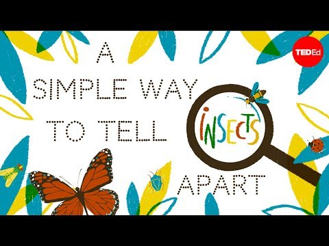 A simple way to tell insects apart - Anika Hazra