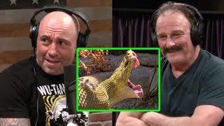 Joe Rogan - Jake the Snake: Mexican Rattlesnakes and Komodo Dragons