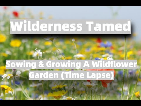 Sowing & Growing A Wildflower Garden
