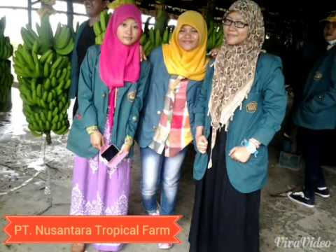 Study tour to Nusantara Tropical Fruit