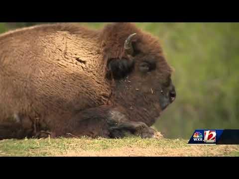 3 Randolph County deputies will bring extra security to Asheboro zoo