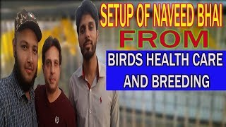 VISIT THE BIRDS SHED OF NAVEED BHAI FROM (BIRDS HEALTH CARE AND BREEDING) | URDU/HINDI