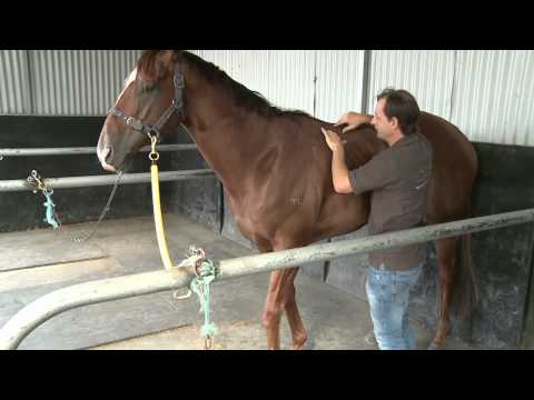 SADDLE AND BACK SORENESS IN A RACE HORSE WITH CHRISTIAN LANGEDER
