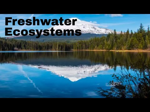 Freshwater ecosystems ( Lakes,Ponds,Rivers,Streams,Marsh,Swamp)