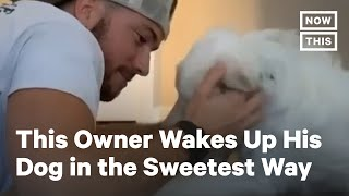 Watch This Blind and Deaf Dog Get Woken Up by Her Owner | NowThis