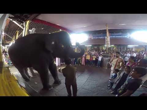 GOPRO and elephant in kukke subrahmanya temple