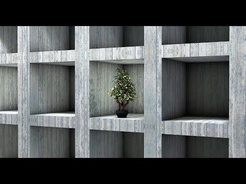 DIY Bonsai Money Tree