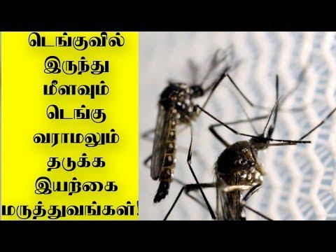 Precaution and Remedies for dengue Fever |Tamil News|