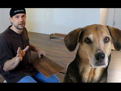 Dog Pee on Laminate flooring!