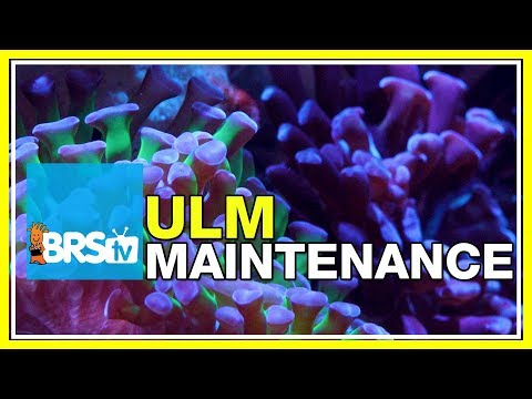 ULM Tank Trials Ep-21: Maintaining an Ultra Low Maintenance Tank | BRStv