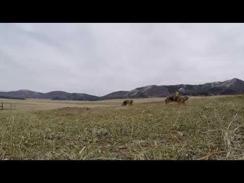 GoPro   Prairie Dog Territorial Dispute