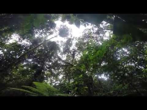 Peru pt. 3: The Amazon